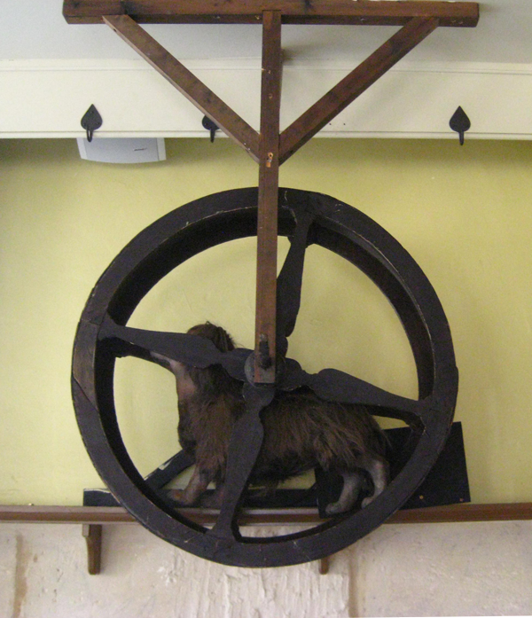 turnspit dog in wheel